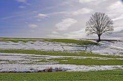 Eenzame boom tijdens dooiperiode Royalty-vrije Stock Afbeelding