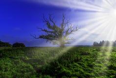 Eenzame boom - Uckfield, Oost-Sussex, het Verenigd Koninkrijk stock afbeelding