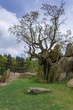 Eenzame boom Verdelende Keien in de Helft royalty-vrije stock foto