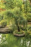 Eenzame boom in water Stock Fotografie