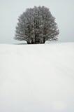 Eenzame Boom in Wit. Royalty-vrije Stock Afbeeldingen