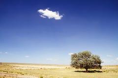 Eenzame boom in woestijn stock afbeeldingen