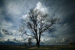 Eenzame boom zonder bladeren Stock Afbeelding