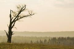Eenzame boom zonder bladeren Royalty-vrije Stock Foto