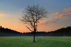 Eenzame boom zonder bladeren met pastelkleur gekleurde zonsondergang, Nederland Stock Afbeelding
