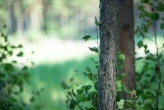 Eenzame boomboomstam Royalty-vrije Stock Foto's