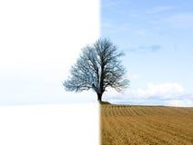 Eenzame boomverandering van de winter in de lente royalty-vrije stock foto