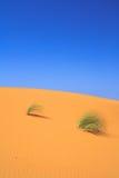 Eenzame bosjes van gras op zandduin Stock Foto