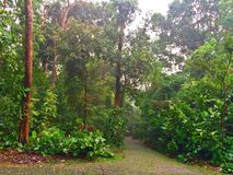 Eenzame boswegen Royalty-vrije Stock Afbeeldingen