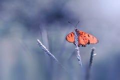 Eenzame buttterfly Stock Afbeelding