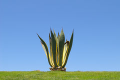 Eenzame Cactus Royalty-vrije Stock Afbeeldingen