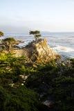 Eenzame Cipresboom Royalty-vrije Stock Afbeeldingen
