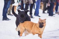 Eenzame dakloze honden op sneeuw Royalty-vrije Stock Foto's