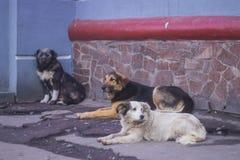 Eenzame dakloze hondslaap op stoep Stock Afbeeldingen