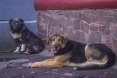 Eenzame dakloze hondslaap op stoep Royalty-vrije Stock Afbeelding