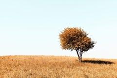 Eenzame de herfstboom Stock Foto