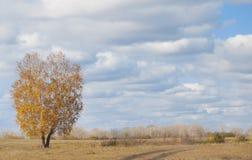 Eenzame de herfstboom Royalty-vrije Stock Afbeeldingen