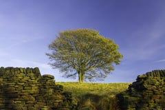Eenzame de herfstboom Stock Afbeeldingen