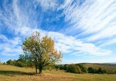 Eenzame de herfstboom op hemelachtergrond. Stock Afbeeldingen