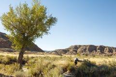 Eenzame de heuvels wijze borstel van de boomwoestijn Stock Fotografie