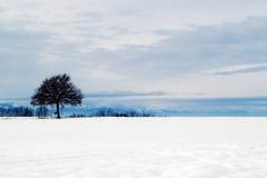 Eenzame de winterboom Stock Afbeeldingen