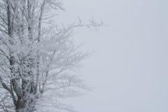 Eenzame die boom met sneeuw en ijs bovenop de sneeuwberg wordt behandeld stock fotografie