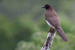Eenzame die Vogel op een stok wordt neergestreken Royalty-vrije Stock Afbeeldingen