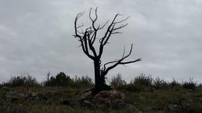 Eenzame dode boom Stock Afbeeldingen