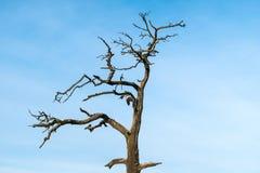 Eenzame dode boom Stock Foto