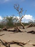 Eenzame dode boom in het Nationale Park van de Doodsvallei in Californië, de V.S. Royalty-vrije Stock Foto's