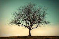 Eenzame dode boom met hemel stock fotografie