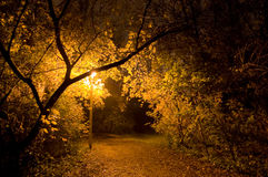 Eenzame donkere gevaarlijke parkweg Royalty-vrije Stock Foto's