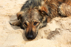 Eenzame droevige hond die op de straat liggen Royalty-vrije Stock Afbeelding