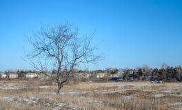 Eenzame, droge boom. Royalty-vrije Stock Afbeeldingen
