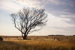 Eenzame droge boom Royalty-vrije Stock Fotografie