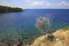 Eenzame droge boom bij de rand van Egeïsche kust Stock Foto