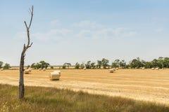 Eenzame droge boom in de voorgrond en de ronde balen van stro bij de achtergrond, de Oekraïne Royalty-vrije Stock Fotografie