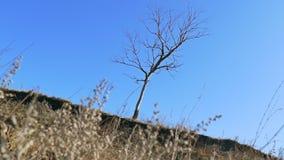 Eenzame droge boom die zich op de beweging van het de aardlandschap van het grondgras bevinden stock videobeelden
