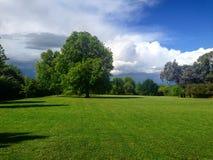 Eenzame eik in het park stock fotografie