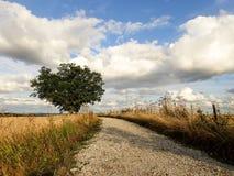 Eenzame eiken boom op landbouwgrond royalty-vrije stock fotografie