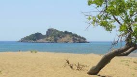 eenzame enige boom, rondvaart, het dalyan strand van de iztuzuschildpad, Turkije stock videobeelden