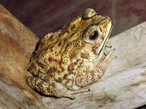 Eenzame Froggie Royalty-vrije Stock Afbeeldingen