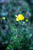 Eenzame gele bloem Stock Afbeeldingen