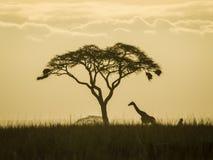 Eenzame Giraf Stock Afbeelding
