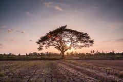 Eenzame groene boom Stock Afbeelding