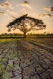 Eenzame groene boom Stock Foto