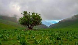 Eenzame groene boom in een weide mist Royalty-vrije Stock Fotografie