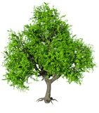 Eenzame groene boom isoleer stock illustratie
