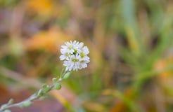 Eenzame gunst op een wild herfstgebied Stock Foto's
