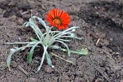 Eenzame heldere bloem Royalty-vrije Stock Fotografie